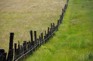 quadrifoglio-azzurro-9-steccato-fra-i-pascoli